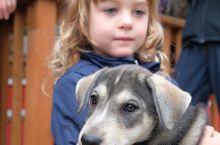 在阿拉斯加的史凯威,参观了当地的阿拉斯加雪橇犬Gold Rush Seld Gogs训练中心,还听了