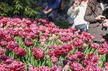 """在入园的时候会看到花园木牌上写着""""布查特花园,超越100年的盛放。""""让人为之动容的话语,不仅仅是满园"""