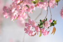春日的下午阳光明媚,不出门看看那些花儿,似乎辜负了这大好春光[调皮]单反也好久没端了,几斤重的长焦端