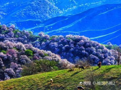 中華福壽山景區