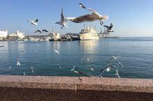 在马斯喀特喂海鸥