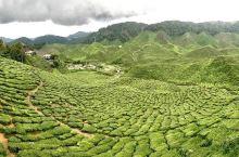 高原上的清新之旅——Tanah Rata Cameron Valley茶园  景点概览 通常人们想到