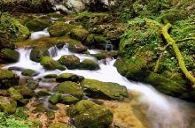 牛背梁国家森林公园位于柞水县营盘镇朱家湾村,茂密的原始森林,清幽的潭溪瀑布,独特的峡谷风光,罕见的石