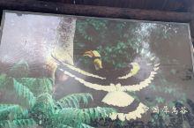 中国唯一一个有犀鸟的地方说~
