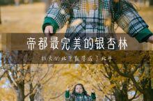 要说何时北京一年中最美的时候,我想大多数人会说是秋天。老舍先生这样说:我啊,有时候更喜欢把北京唤做「