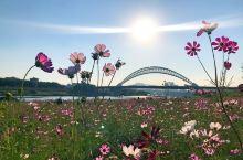 广州拍花海哪里最美?莫过于从化大桥下(自来水厂广场)的浪漫花海! 交通十分方便,导航至从化自来水公司