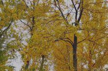 享受秋天给我们的美。