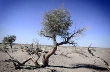 怪树林位于额济纳旗达来呼布镇西南约28公里,该区内百年前是一片原始森林,由于自然因素,大片枯死的胡杨