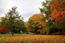谁说是要去加拿大去看枫叶?西雅图的枫叶也是北美最美的景色!西雅图不只有太空针塔、派克市场,深秋十月西