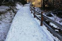 这场雪应该是在我们去牟尼沟前几天下的,雪量还不小,高原的雪很神奇,丝毫不会让植物枯萎。来自北方的我对