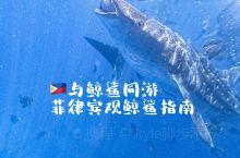 与世界上最大的鱼(鲸鲨)同游|菲律宾奥斯洛布观鲸指南  位于菲律宾宿务岛南部的奥斯洛布(Oslob)