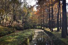 黎坪森林公园醉美秋色