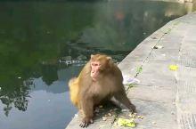 逍遥谷  遇逍遥猴 进入逍遥谷前买了三包喂猕猴的小食,刚走过木桥,不知从哪窜出一只猴子,一把抢过我手