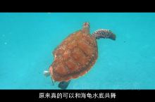 【在野生海龟的网红海岛打卡,尽情与海龟共舞】你一定听说过仙本那,但不一定知道热浪岛。如果不是亲眼所见
