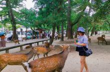 奈良公园是去大阪必打卡之地。很多明星都慕名前来打卡, 向往自己也是终于去了  图一二是帮朋友朋友拍的
