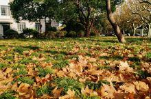 深秋初冬的师大校园充满了神奇的色彩,各种斑斓的色彩让人流连忘返。可以说华师大的校园风光不次于一些著名
