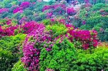 赏世界花海,游百里杜鹃,贵州欢迎您