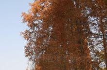 采石矶里的树