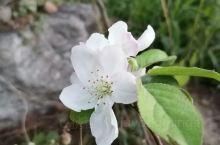 什么什么花,什么花什么,花什么什么。冬季开花四啊四五六。