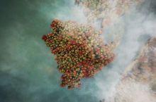 十一月底的四明山秋色正浓,一路盘山公路而上,正赶上雨后起雾,航拍下的四明山水杉湖和森林公园红绿相接,