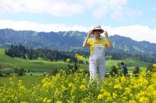#那拉提草原#  那拉提旅游风景区的草原是世界四大草原之一亚高山草甸植物区。由空中草原,河谷草原和国