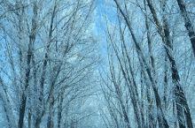 春节将至,想好去哪里玩吗?时至当下,北方的人聚集去南边过冬,而南边的人儿却争相来北边看雪景。这是一场
