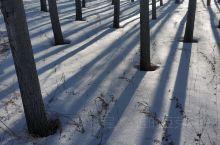 一排排整齐的杨树,一条条通往外界的路,一个个黑色的影子,造就了乡村的美景!冬天的东北就是这样美的哦⊙