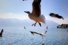 你还好吧!来过冬的海鸥也还好吧!瀑布公园的山茶花来了吗?还记得我们一起晒过蓝花楹朋友圈吧!抚仙湖畔的