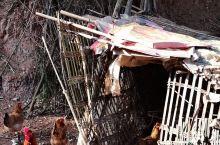 阳光下,奶奶喂养的鸡,看我在拍它,它在做造型呢 蓬安·南充