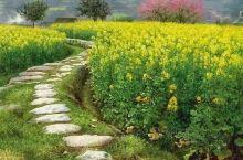 《来自罗平的诱惑:油菜花已经盛开了……》  我是孤独浪子,希望我的拍拍让您有所收获。 漫游神州31载