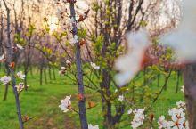 虽然是疫情期间,但能够到城市周边赏花还是很不错的。一切都是崭新的开始,欣欣向荣的感觉真好!