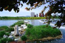 这里不仅风景美,更适合遛娃  走进位于石景山永定河畔的莲石湖公园,看得最多的就是孩子。公园茂密的花草