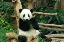 吉隆坡动物园