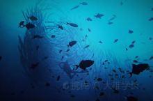 【人间天堂—诗巴丹、卡帕莱】   卡帕莱岛  每年必须打卡的诗巴丹  一直以来都想写一篇关于潜水的游