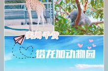 【超实用攻略】悉尼最有名的塔龙加动物园  塔龙加动物园位于悉尼北岸的小山丘上,是一座盘山式的动物园。