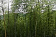 竹林深处# 松阳枫坪沿坑岭画家村