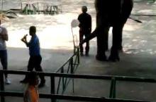 是拉差龙虎园,大象跟游客比赛吹气球
