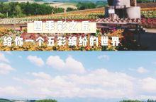 北海道美瑛四季彩之丘  这是一个来美瑛不可错过的景点,你印象中的北海道花田是怎么样的呢?来四季彩之丘