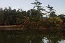 nara东大寺除大佛殿外免费!鹿爷很多所以有点味儿!镜池的红叶风景初成……拍写真很好看