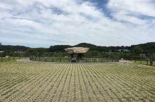 支石墓遗址,是世界历史文化遗产,地点就在仁川的江华岛上,支石墓分布比较广,但是江华岛居多,从首尔过去