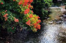時序到了十一月,就連亞熱帶的台灣也開始沾染點點秋意-基隆河畔