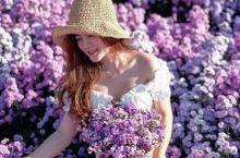 清迈泰国女明星最爱的花海  想置身花海吗?阵阵香气沁人心脾?白色的小雏菊迎风飘舞,绚烂的紫色薰衣草在