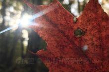 蜜月湖和阿冈昆,进入10.6号,枫叶红度适中,观景台俯瞰的部分仍为绿色居多,枫叶季还在等待最美的风景