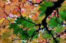#旅行学英语# 美国西部,一棵树的N种姿态…