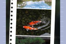 日本三大名園之一~後樂園  日本三大名園指的是:石川縣金澤市的兼六園、岡山縣岡山市的後樂園、茨城縣水