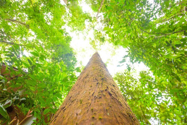 Xishuangbanna Tropical Rainforest Nature Reserve3