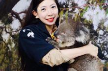 澳大利亚可以抱到考拉的地方-阿德莱德Cleland Wildlife Park  着绿树成荫的小巷蜿