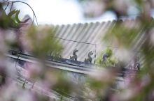 春季的 颐和园   【景点攻略】 详细地址:北京海淀区 颐和园 公园  交通攻略:自驾或公交车  开