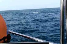 斯里兰卡观鲸