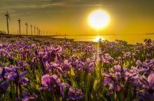 最爱那一抹夕阳,来威海一定别错过这条美丽的风车之路,赏落日余晖必打卡!